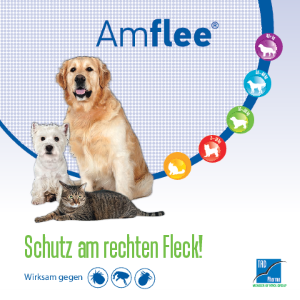 PDF: Amflee Informationsbroschuere
